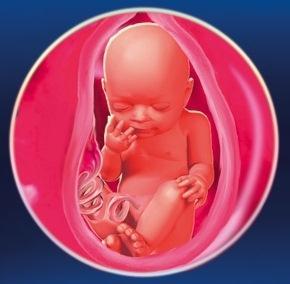 29 неделя Календарь беременности