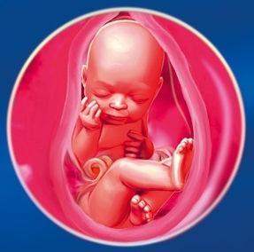 35 неделя Календарь беременности