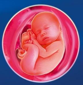 37 неделя Календарь беременности